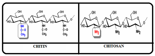 View of CHITOSAN: A MULTIFACET POLYMER   International