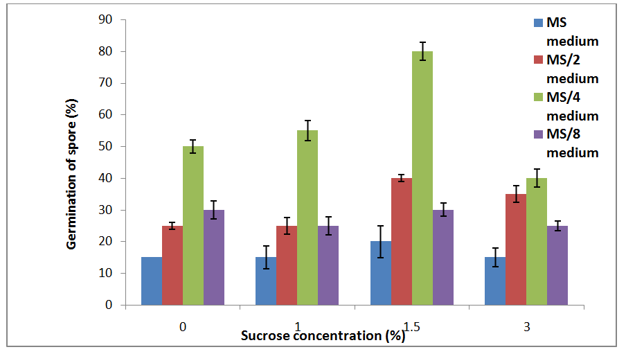 2: spore germination rate of b  coronatumin different ms media with  different sucrose concentrations after 5-6 day of inoculation