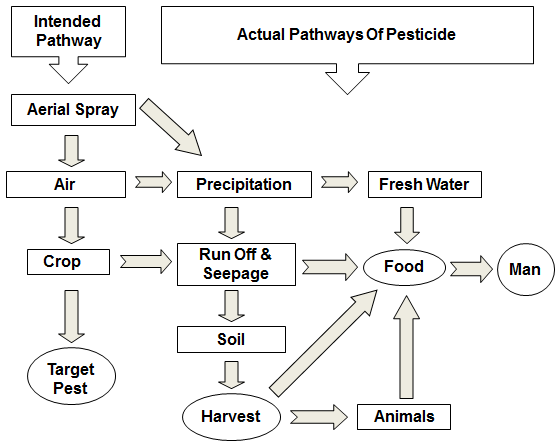 Agro pesticides and andrology sharma international journal of 1 flow diagram depicting the intended and actual pathway of the route of exposure of pesticides to target and non target species sharma and goyal ccuart Images