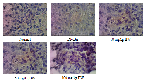 The effect of rosella hibiscus sabdariffa l treatment on il 10 fig 2 the immunohistochemistry of il 10 induced on sprague dawley rats spleen treated with dmba and ethanol extract of roselle ccuart Image collections
