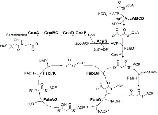 View of MOLECULAR DOCKING STUDY OF FLAVONOID COMPOUNDS AS